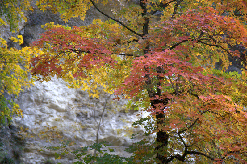 Lost Maples State Park is one of the few places in Texas where visitors can spot the changing colors of fall foliage.